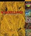 Wirbellose: ein Bestimmungsbuch - Julian Sprung